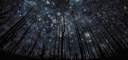 41811_photo_manipulation_forest_nigth_full_of_stars