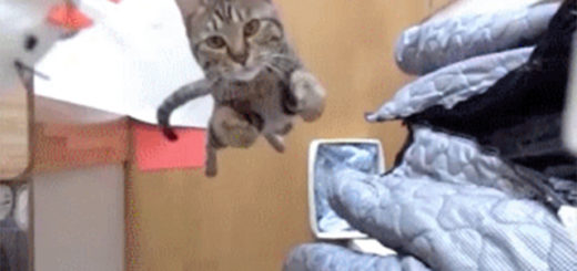 cat_gif_feat